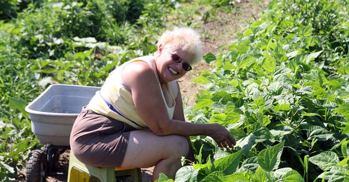Faye Wolhrabe picks beans at Triple B Produce.
