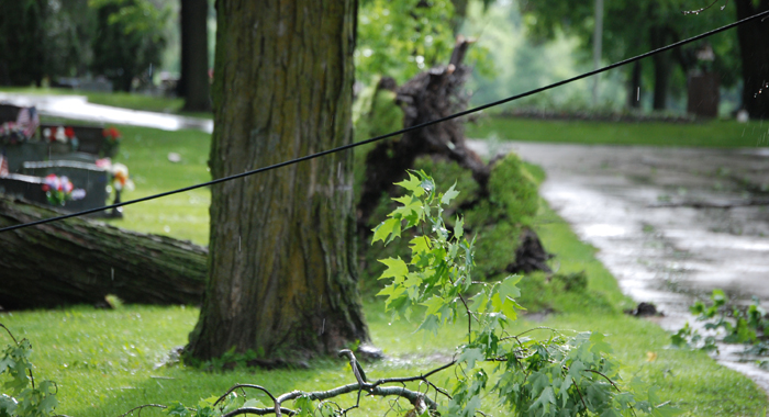 A downed line in Graceland Cemetery.  Jeff Hoffman photo